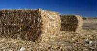 Камины работающие на топливе из биомассы
